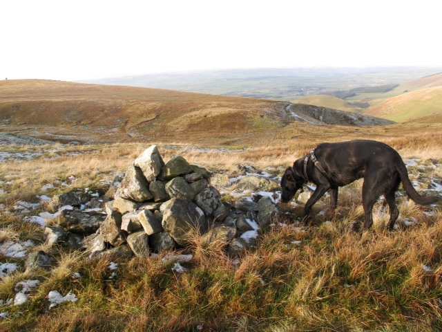 Monty helping me to find new cairns!