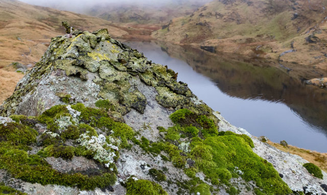 Lichen and moss on granite boulder in Lake District